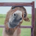 Holly the donkey