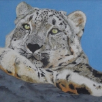 Snow Leopard relaxing