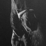 Frans horse