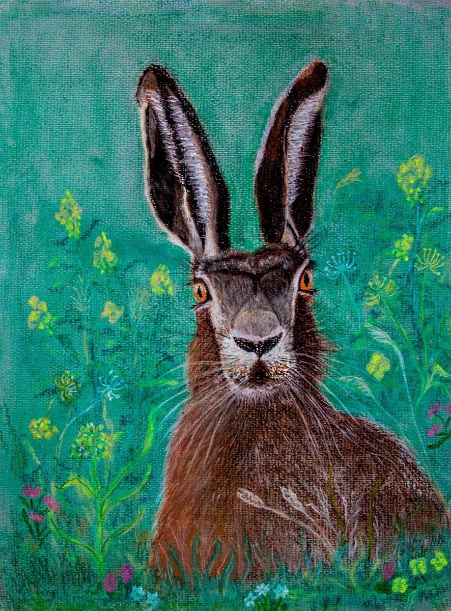 Hare in a meadow - pastels