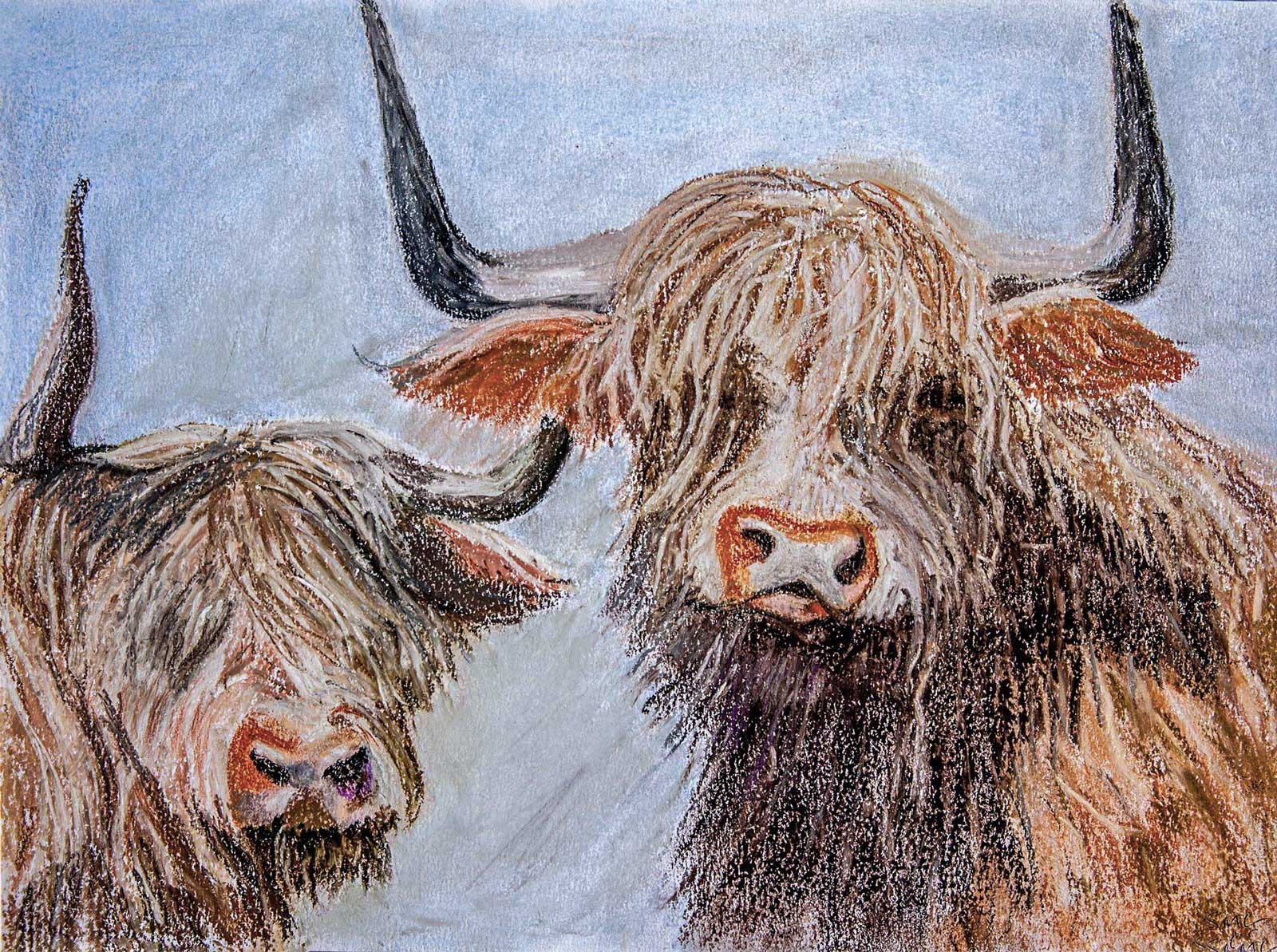 Highland cattle - pastels