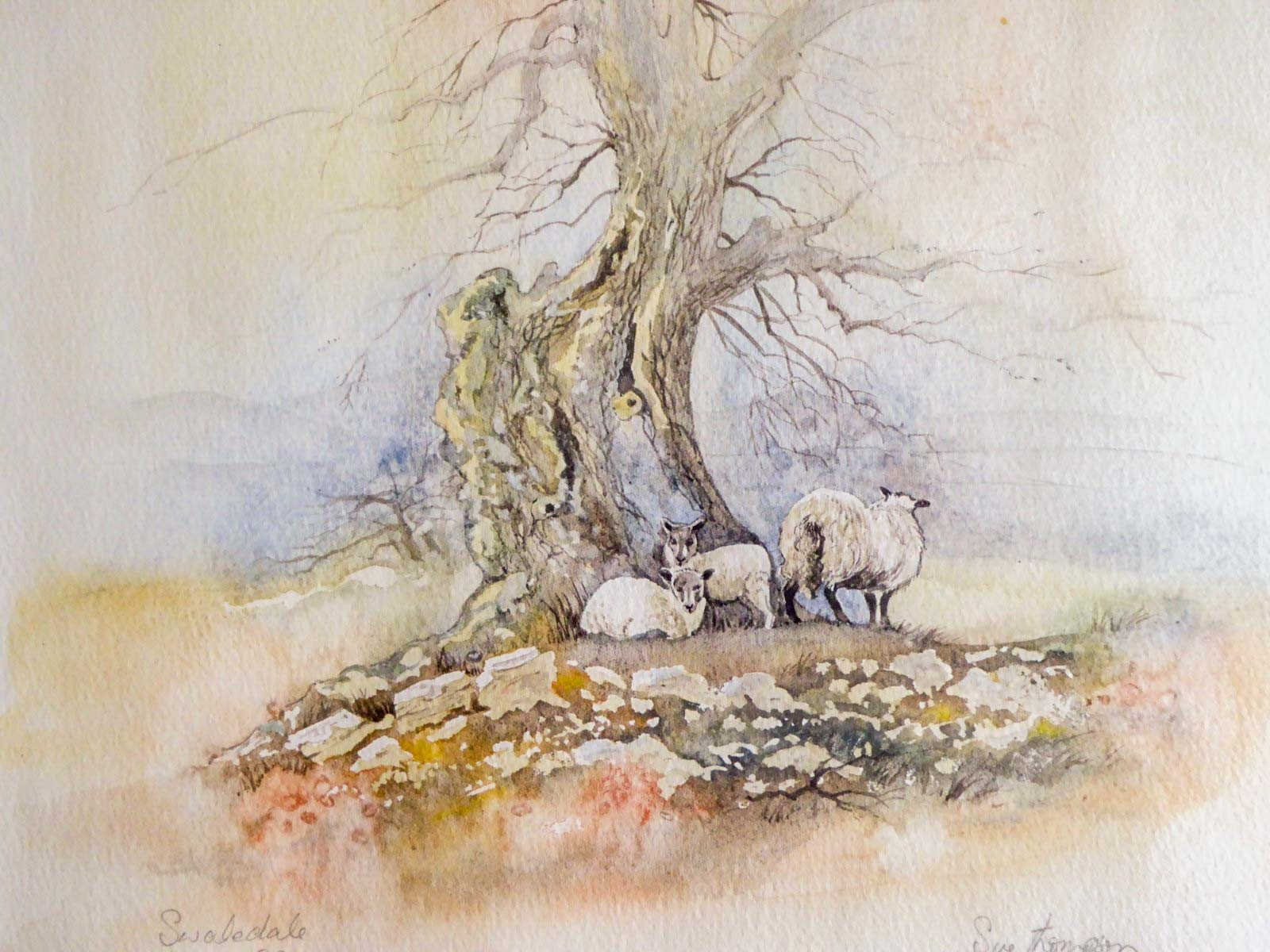 Sheep in Swaledale