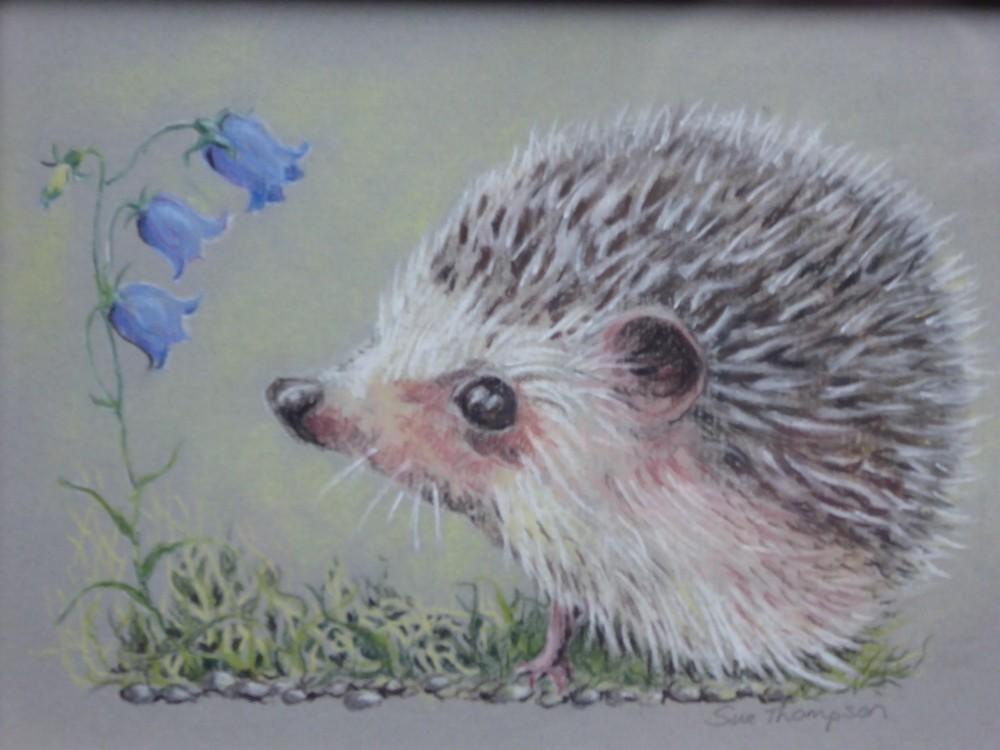 Little Nosey Hedgehog