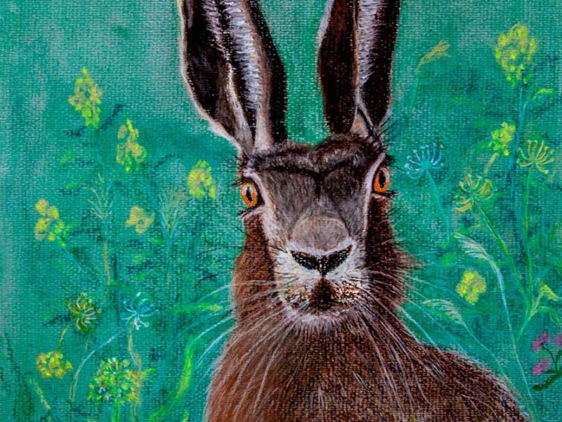 Hare in meadow-pastels
