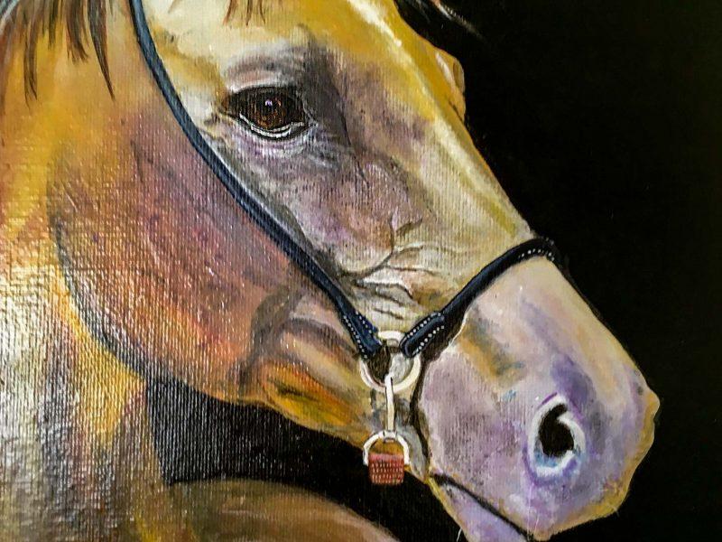 Noah - horse portrait